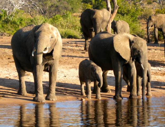 Chillin' at Chobe in Botswana.  (Photo by author.)