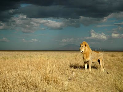 King of the Serengeti.