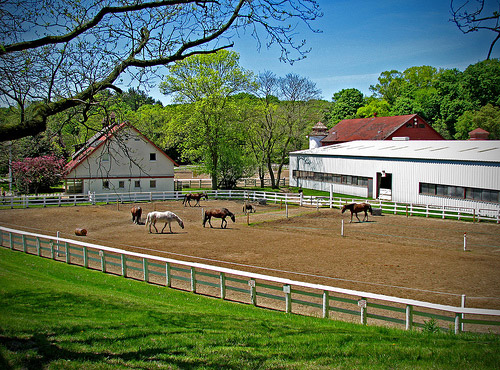 Horse play at Sunnybrook Stables. (Photo credit: Sunnybrook Stables.)