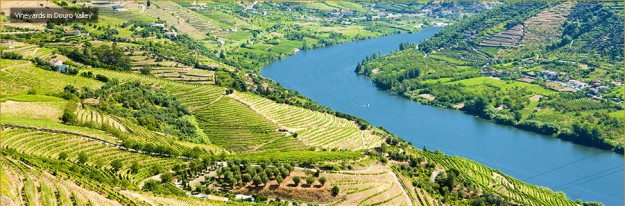Vineyards along Portugal's Douro River.