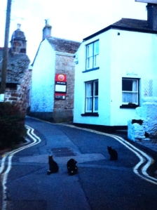 Mousehole, Cornwall, England, United Kingdom, cats