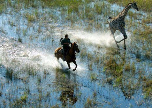 horseback-safaris