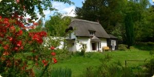 A New Forest Cottage.