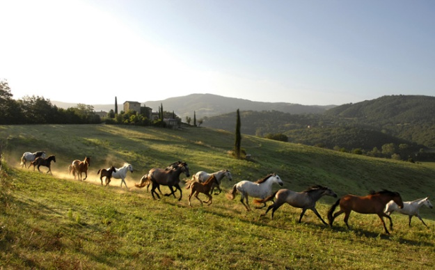 All the pretty horses at Castello di Reschio.