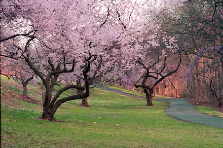 Essex County Branch Brook Park, NJ April 5-13, 2014