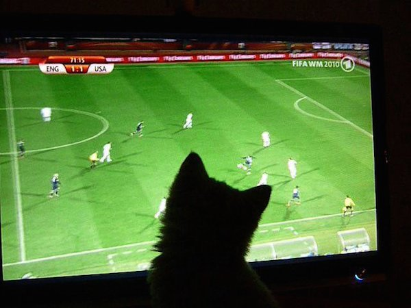 (Photo credit: soccercat)