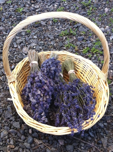 Lavender's bounty extends well beyond this basket.